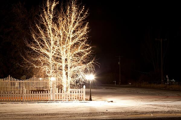 trees wrapped in white holiday lights