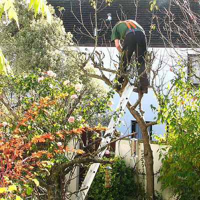 Plant_Tree_Pruning