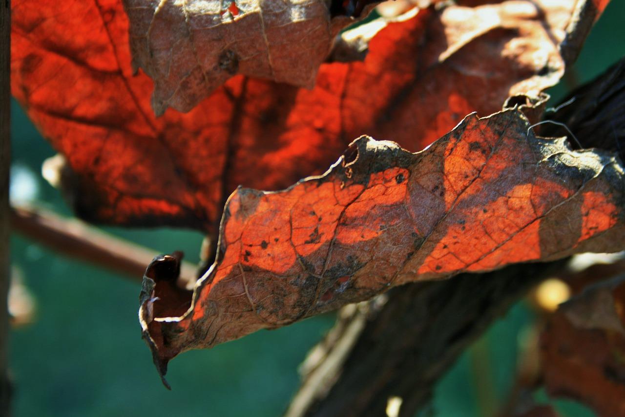 russet-leaf-350222_1280.jpg