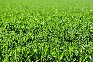 when to plant grass in idaho