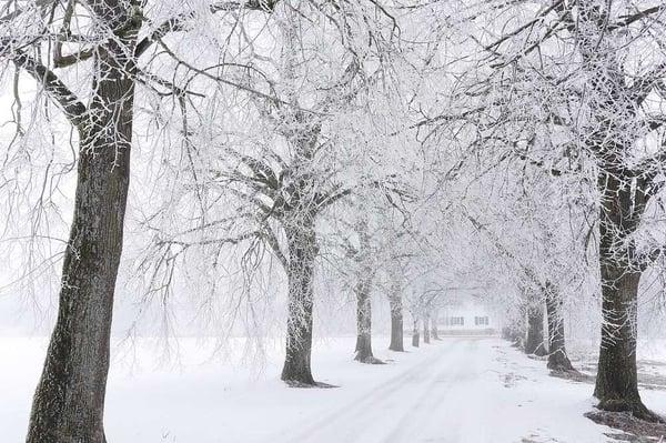 winter stress on trees