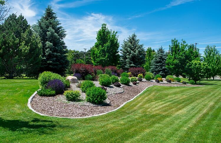 healthy plant and flower bed with mulch