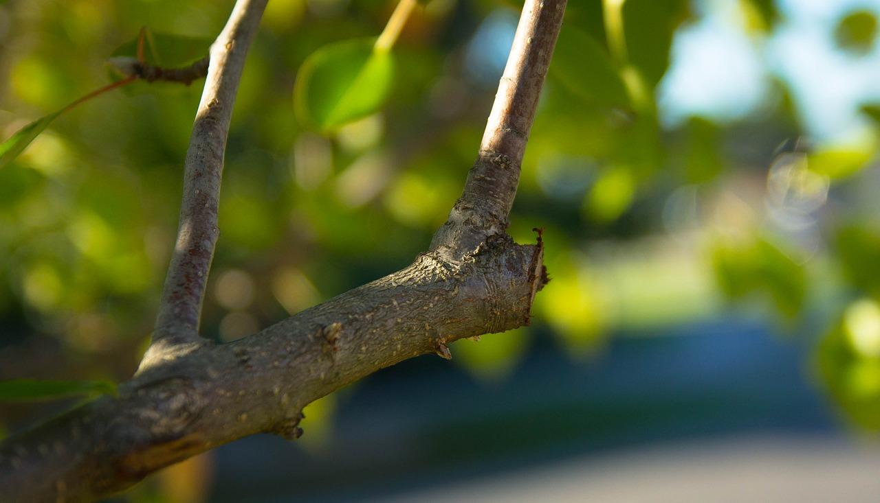 pruning job