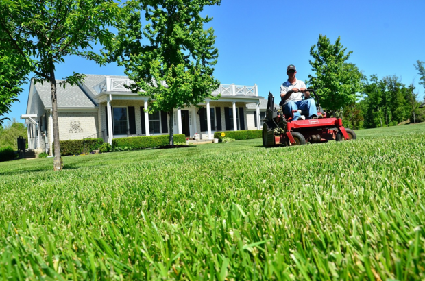 Mulching vs  Bagging Grass Clippings: Which Is Best For My