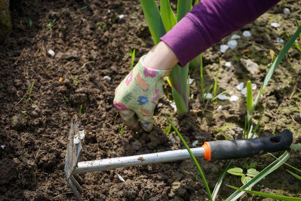weeding in the garden